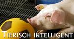 Tierisch intelligent – Bild: ARTE F/© Mona Lisa/Eurelios