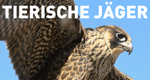 Tierische Jäger – Bild: n-tv/National Geographic Channel International