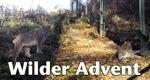 Wilder Advent – Bild: MDR/Daniel Dietrich