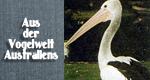 Aus der Vogelwelt Australiens