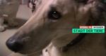 Die Stadt der Tiere – Geschichten aus dem Tierheim Berlin – Bild: Spiegel TV Wissen