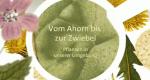 Vom Ahorn bis zur Zwiebel – Bild: BR-alpha/Screenshot