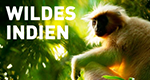 Wildes Indien – Bild: National Geographic Channel