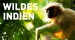 Wildes Indien – Bild: National Geographic Channel