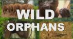 Waisen der Wildnis – Bild: Spiegel TV Wissen