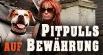 Pitbulls auf Bewährung – Bild: Discovery Communications, LLC./TLC/Screenshot