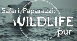 Wildtiere vor der Kamera – Bild: National Geographic Channel (Screenshot)