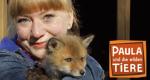 Paula und die wilden Tiere – Bild: BR