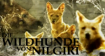 Die Wildhunde von Nilgiri – Bild: Discovery Communications, LLC.