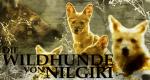 Die Wildhunde von Nilgiri – Bild: Discovery Communications, LLC.