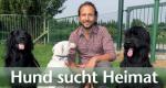 Hund sucht Heimat – Bild: WDR/Encanto