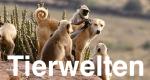 Tierwelten – Bild: ZDF Enterprises