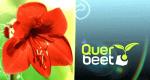 Querbeet – Bild: BR