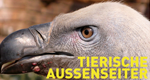 Tierische Außenseiter – Bild: National Geographic Channel
