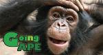 Dschungelmission – Einsatz für die Affen