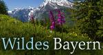 Wildes Bayern – Bild: SWR/BR/nautilusfilm