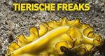 Verrückte Tierwelt – Bild: National Geographic Channel