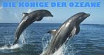 Die Könige der Ozeane – Bild: BBC
