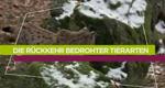 Die Rückkehr bedrohter Tierarten – Bild: arte