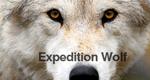 Expedition Wolf – Die Rückkehr eines Raubtieres – Bild: BBC One