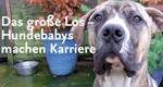 Das große Los – Hundebabys machen Karriere – Bild: Animal Planet