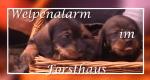 Welpenalarm im Forsthaus – Bild: MDR