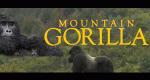 Der Berggorilla – Bild: BBC