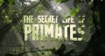 Das Geheimnis der Menschenaffen – Bild: BBC