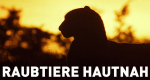 Raubtiere hautnah – Bild: National Geographic Channel