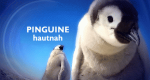 Pinguine hautnah – Bild: BBC