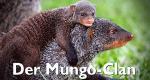 Der Mungo-Clan – Bild: BBC