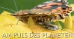 Am Puls des Planeten – Bild: arte