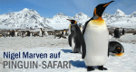 Nigel Marven auf Pinguin-Safari – Bild: DCI