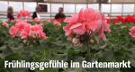 Frühlingsgefühle im Gartenmarkt – Bild: NDR
