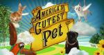 Die süßesten Haustiere der Welt – Bild: Discovery Communications, LLC./Screenshot