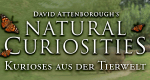 David Attenboroughs Wunder der Natur – Bild: Eden Channel