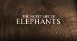 Das geheime Leben der Elefanten – Bild: BBC One/Screenshot