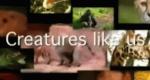 Zoogeflüster – Bild: Animal Planet