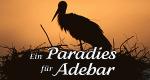 Ein Paradies für Adebar – Bild: MDR/Michael Kaatz
