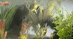 ORB Aquarium – Bild: ORB