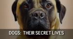 Dogs: Their Secret Lives – Bild: Channel 4/Screenshot