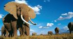 Kampf den Elfenbeinjägern – Bild: DCI
