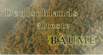 Deutschlands älteste Bäume – Bild: ARD