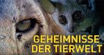 Geheimnisse der Tierwelt – Bild: Nat Geo Wild