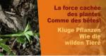 Kluge Pflanzen – Bild: arte