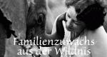 Familienzuwachs aus der Wildnis – Bild: DCI