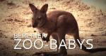 Berliner Zoo-Babys – Bild: Polyband/Screenshot