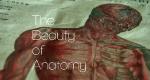 Die Schönheit der Anatomie – Bild: BBC Four/Screenshot