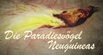 Die Paradiesvögel Neuguineas – Bild: arte