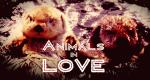 Natürlich verliebt - Wie Tiere flirten – Bild: Animal Planet/Screenshot